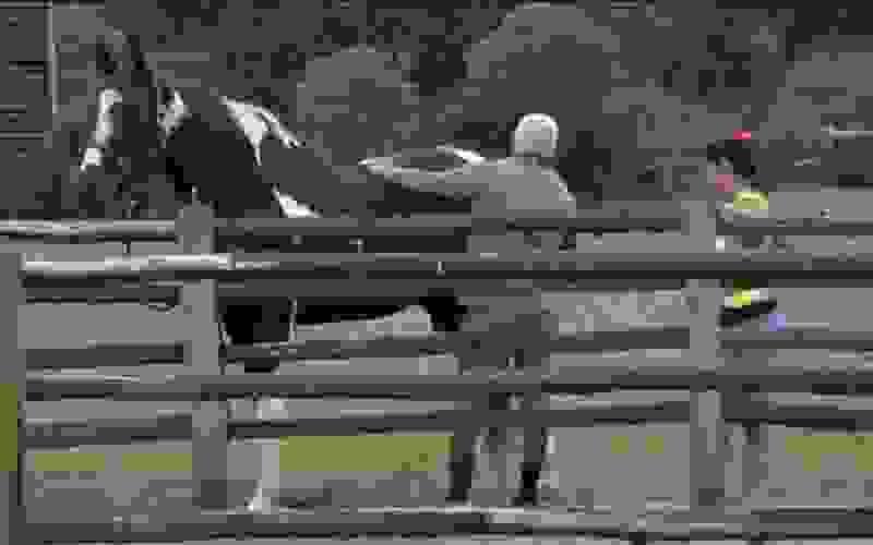 """""""Ele é tão bonito"""", comenta Tiago enquanto escova o Colorado - A Fazenda 13"""